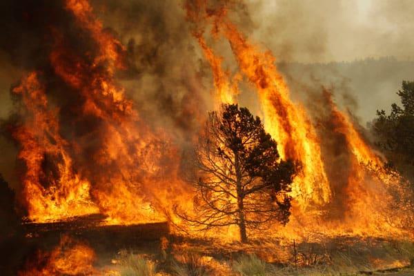 Incendio en el Acuartelamiento Aéreo de Los Alcázares arrasa la estepa murciana